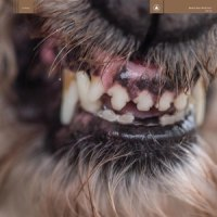 Blanck Mass - World Eater LP